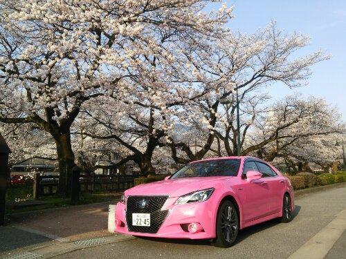 桜とピンクのクラウン
